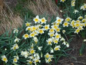 Happy Spring!!