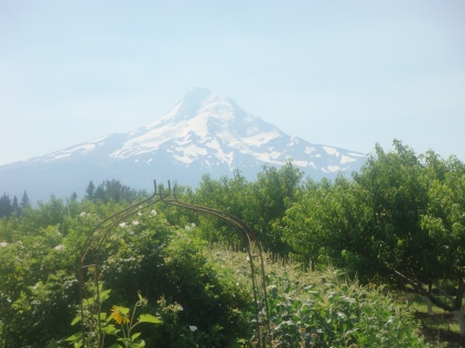 Standing at the Draper Girls Country Farm looking at Mount Hood