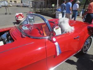 Temecula Cars Saturday 094