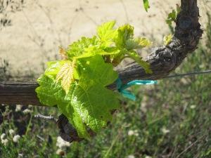 Temecula Wineries 2014 036